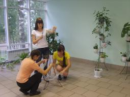 Проект  «Зимний сад в школе!»