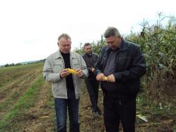На кукурузном поле.