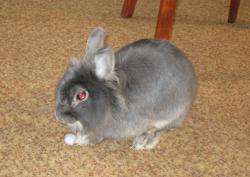 Кролик Ксюша.