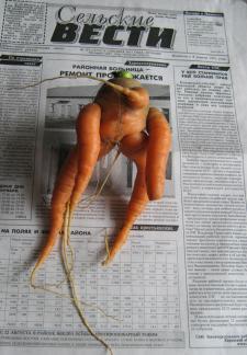 Чудо-морковь.