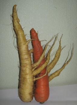 Любовь-морковь.