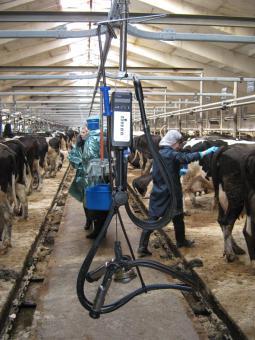 Молочное оборудование.